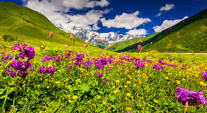 Panorama of alpine meadows in the Caucasus mountains. Upper Svan Stock Photos