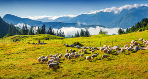 Panorama of the alpine pastures in the Slovenian Stock Photo