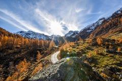 Panorama alpino con el bosque de la montaña, el cielo azul y los árboles rojos durante otoño Foto de archivo