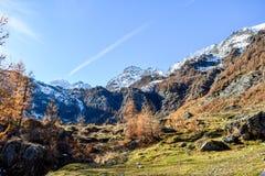 Panorama alpino na floresta da montanha com céu azul e em árvores vermelhas durante o outono Foto de Stock