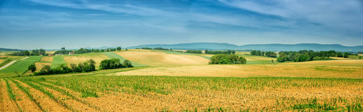 Panorama of Alsace rolling landscape with lines of sprouts. Stock Photos