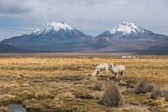 Panorama of Altiplano Royalty Free Stock Photography