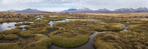 Panorama of Altiplano stock photography