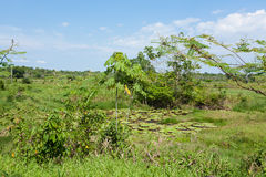 Panorama from Amazon rainforest, Brazilian wetland region. Royalty Free Stock Photos