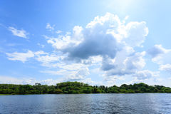Panorama from Amazon rainforest, Brazilian wetland region. Stock Photo
