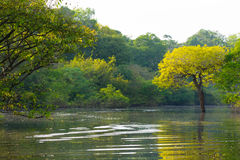 Panorama from Amazon rainforest, Brazilian wetland region. Royalty Free Stock Image