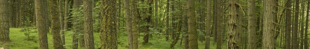 Panorama ambiental de la bandera del paisaje del árbol Foto de archivo libre de regalías