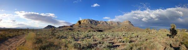 Panorama of american prairie with Joshua trees Stock Image