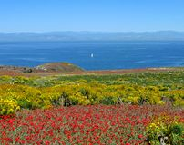 Panorama, Anacapa Island. Panorama toward California mainland with brilliant coreopsis, iceplant, Anacapa Island, Channel Islands National Park, California Stock Photos