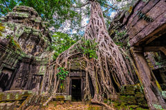 Panorama of ancient stone door and tree roots, Ta Prohm temple r Stock Photos