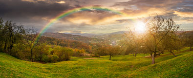 Panorama of apple orchard on hillside at sunset Royalty Free Stock Photo