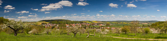 Panorama of apple tree blossom in spring Stock Image