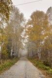 Panorama asombroso del otoño con los abedules a lo largo del camino, montaña de Vitosha, Bulgaria Foto de archivo