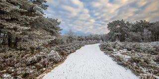 Panorama Assen Drenthe för vinterskoglandskap arkivfoto