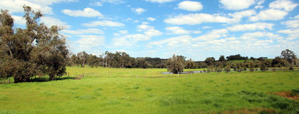 Panorama of  Australian Rural Scene Stock Image