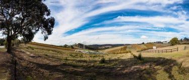 panorama australijski winnica zdjęcia royalty free