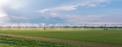 Panorama of the automated farming irrigation sprinklers system on cultivated agricultural landscape field. Summer sunset stock photos