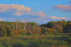 Panorama, Autumn floodplain forest Royalty Free Stock Photo