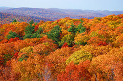 Panorama of autumn foliage in  bear mountain Royalty Free Stock Photography