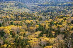 Panorama of the autumn forest. Stock Photos