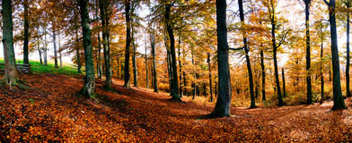 Panorama of autumn forest Royalty Free Stock Photography