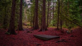 Panorama of autumn forest Royalty Free Stock Photo