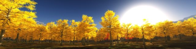 Panorama of autumn forest, panoramic sunset. Trees and sun Royalty Free Stock Image