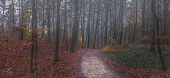 Panorama autumn forest path with mist Stock Photos