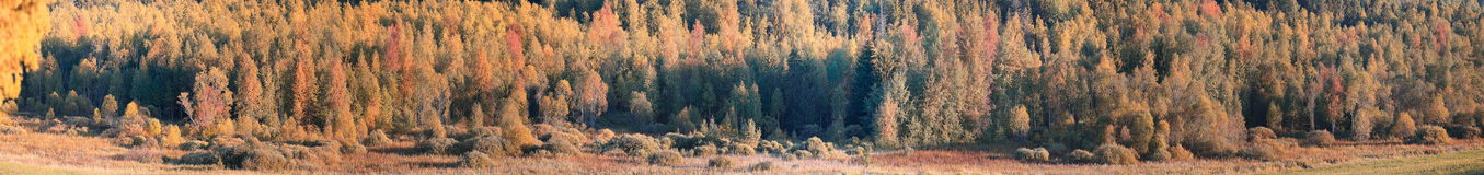 Panorama of autumn forest Stock Image
