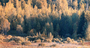 Panorama of autumn forest Stock Photos