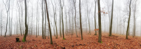 Panorama of Autumn forest with trees at mist Stock Images
