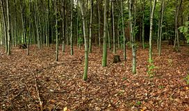 Panorama of autumn forest Stock Photography