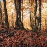 Panorama of autumn forest Stock Photo