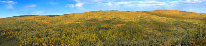 Panorama of Autumn Hills near Fairbanks, Alaska Stock Photography