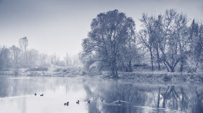 Panorama of autumn selling with ducks. Monochrome image. Stock Image