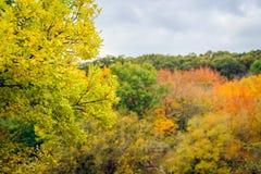 Panorama of autumn trees in Australia Royalty Free Stock Photos