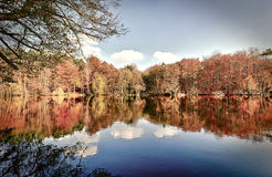 Panorama of autumn trees. At a glassy lake royalty free stock photo
