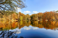 Panorama of autumn trees. At a glassy lake stock images