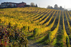 Panorama of autumn vineyards in Italy Royalty Free Stock Photo
