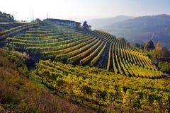 Panorama of autumn vineyards Stock Image