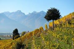 Panorama of autumn vineyards in Switzerland Royalty Free Stock Images
