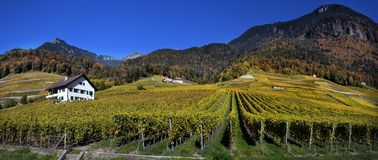Panorama of autumn vineyards in Switzerland Royalty Free Stock Images