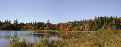 Panorama av algonquinparken Kanada i fallfärger Arkivfoton