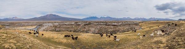 Panorama av Altiplano Royaltyfri Fotografi