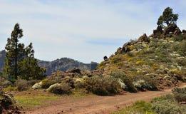 Panorama- av berget i våren, Gran canaria ö Arkivfoton