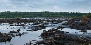 Panorama av Blakemere mossa i den Delamere skogen, Cheshire, UK fotografering för bildbyråer