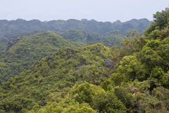 Panorama av Cat Ba National Park royaltyfri fotografi