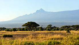 Panorama av den afrikanska savannahen Royaltyfri Bild