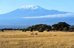 Panorama av den afrikanska savannahen Royaltyfri Foto
