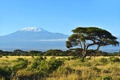 Panorama av den afrikanska savannahen Royaltyfria Foton
